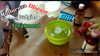 Influenza Disease In Budgies And Treatment