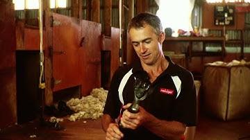 Paul Avery World Champion Sheep Shearer