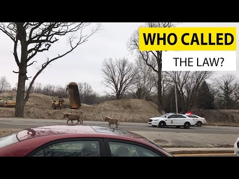Who Called The Law? | JukinVideo