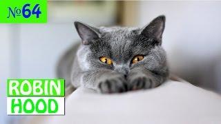 ПРИКОЛЫ 2017 с животными. Смешные Коты, Собаки, Попугаи // Funny Dogs Cats Compilation. Март №64