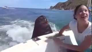 Морской котик устроил перекус во время движения катера