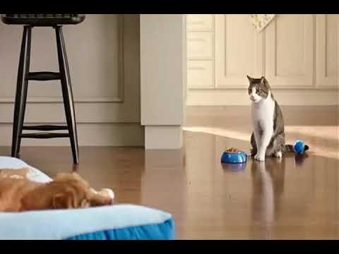 Funny Cats Compilatión #3 :D