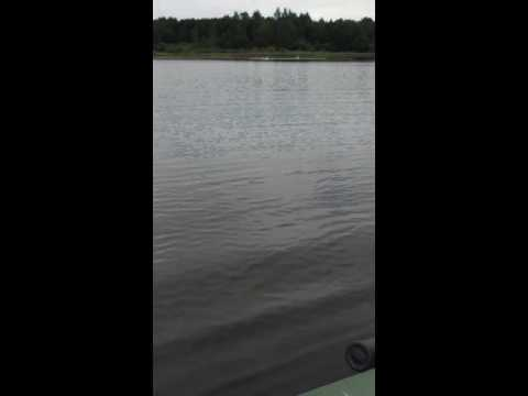Рыбалка с матом