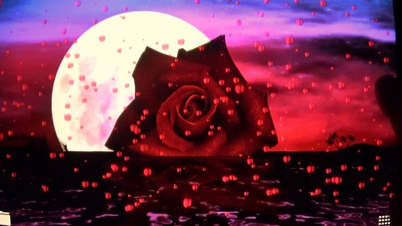 3d Rose Wallpaper Apps Love Rose Wallpaper Youtube