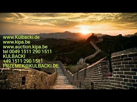 China racing pigeons, every week shipping to China of Kulbacki pigeons contact tel +49 1511 290 1511