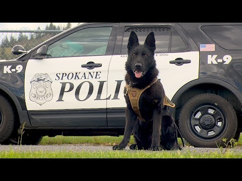 Northwest Profiles: K9 to 5