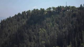 Ayubia National Park (pine trees)