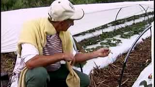 Gambar cover Agricultor por opção
