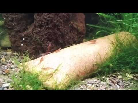 30 Gal Planted Tank - After Fish Tuberculosis?
