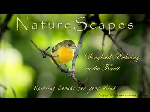 🎧 BIRDS SINGING IN THE FOREST - Relaxing Sounds of Songbirds and Water to help Sleep & Study