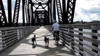 Winston & Zeenah The Doberman Pinscher Go Biking
