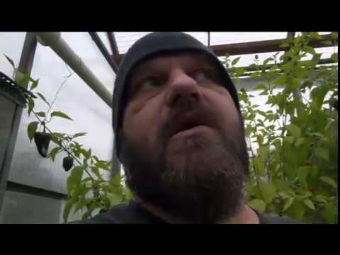 ⟹ LAST #GREENHOUSE TOUR OF 2016, #Pepper Plants, Tomatoes, an more!!