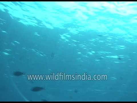 Ship wrecks spotted deep beneath the Indian Ocean