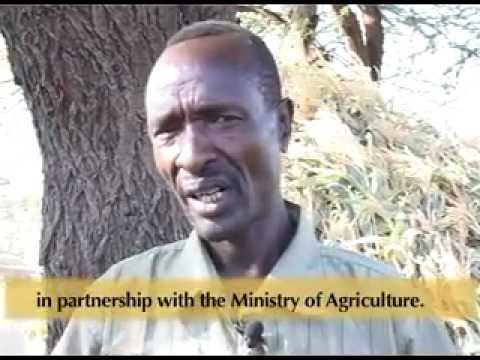 From Pastoralist to Farmer