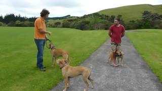 dog training tips jumping on people