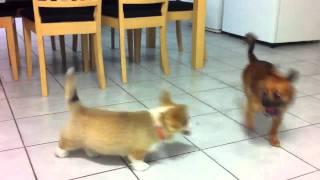 Riku And Basil