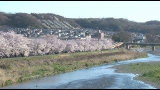 作家として岐路に立つ青年タケルは、桜色に染まる季節、高校時代の同級...