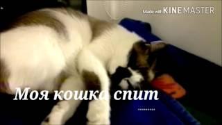 Моя кошка спит