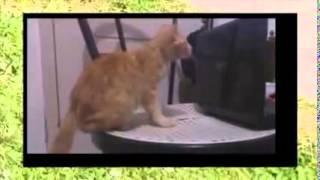 Самые смешные моменты с кошками  смешные видео 2014   смешные животные