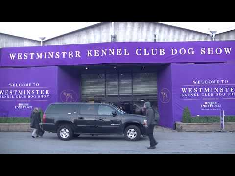 Westminster dog show on 13th February 2018