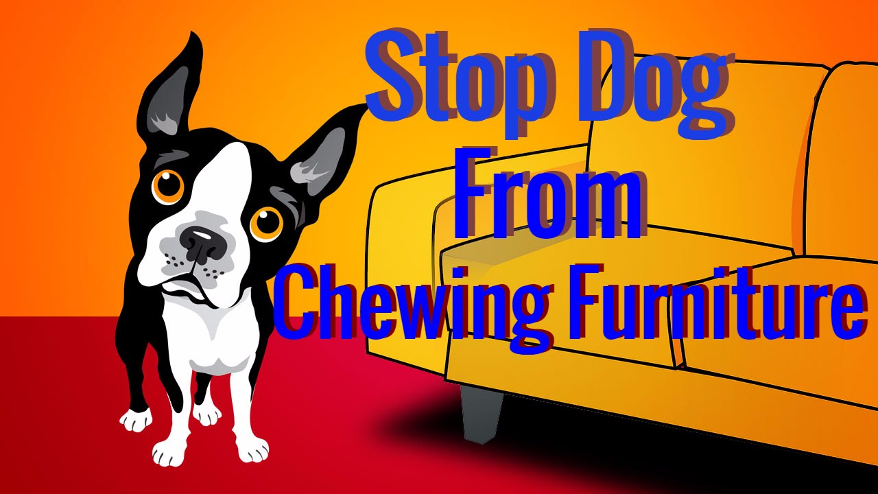 Stop Dog From Chewing Furniture - Best Dog Training video ...