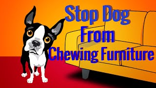Stop Dog From Chewing Furniture - Best Dog Training Video