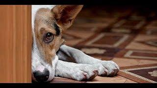 """Средство для устранения пятен и запаха мочи собак """"СТОП-ЗАПАХ"""""""