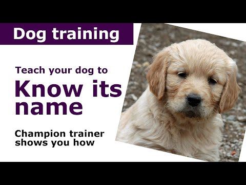 How to train your dog to know its name | Expert puppy training advice