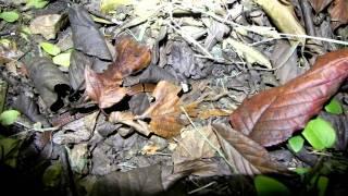 2011 10 21 環紋赤蛇