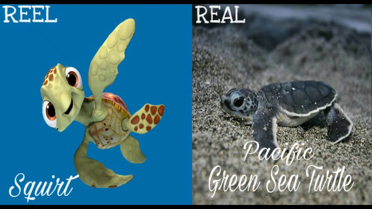 Download ☆Finding DORY all characters in REAL LIFE☆ #Reel and Real (R&R)