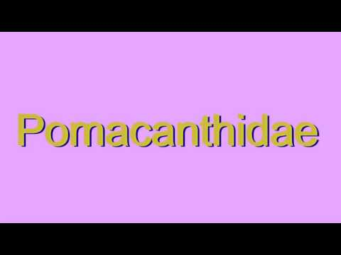 How to Pronounce Pomacanthidae