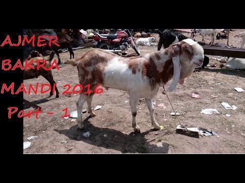 """Ajmer Bakra Mandi 2016 - Part 1 """"Deonar Goats"""""""