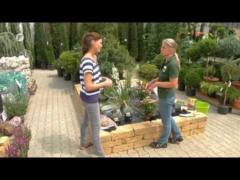 Kiesgarten anlegen - Blatt und Bluete Tipp der Gartenwelt Dauchenbeck