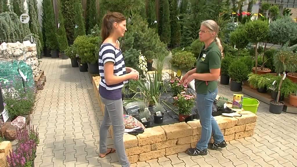 Kiesgarten anlegen  Blatt und Bluete Tipp der Gartenwelt