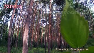 Природа лес - Пожелание вам духовного настроения!