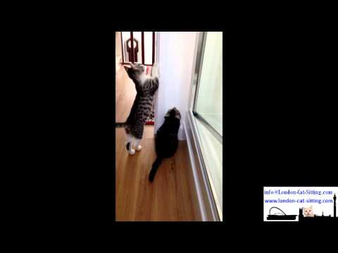 Kitten Care London - Playing With Light Switch