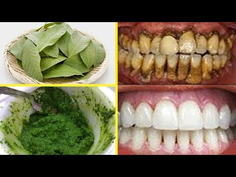 In Just 2 Minutes  -Use Guava Leaves Paste To Turn Yellow Teeth To Pearl White Teeth