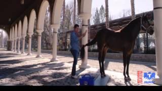 Ariel Camacho y Los Plebes Del Rancho Te Metiste VIDEO OFICIAL  LETRA