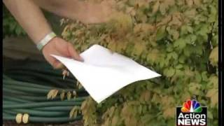 Tips from Toby: Fighting spider mites