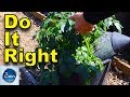 Tips on watering container potatoes correctly - In Just Two Minutes