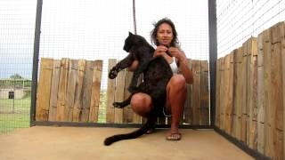 Playing with Pardus the black leopard at Cheetah Experience