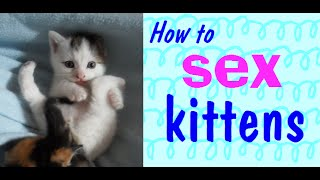 How to sex kittens.