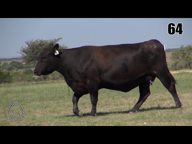 Pearcy Angus Ranch Lot 64