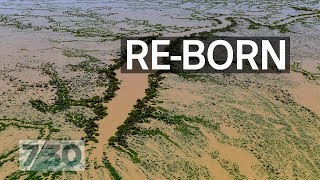 Lake Eyre's biggest flood in nearly 50 years | 7.30