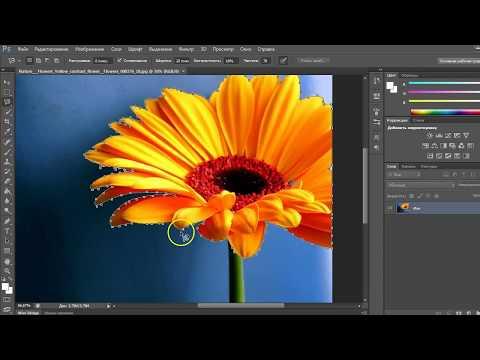 Как вырезать объект в Фотошопе с помощью инструмента Магнитное лассо