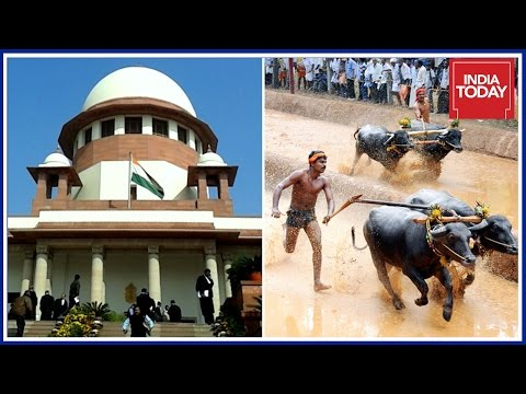 PETA To Challenge Jallikattu & Kambala Law In Supreme Court