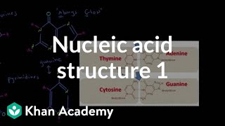 Nucleic acid structure 1 | Chemical processes | MCAT | Khan Academy