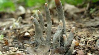 """Nhìn thấy """"bàn tay ma"""" này trồi lên trong vườn nhà, bạn hãy tránh xa kẻo gặp nguy hiểm"""