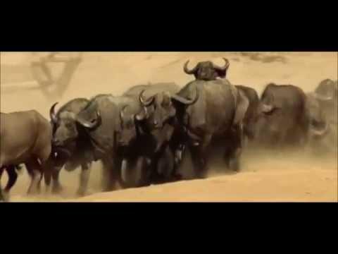 15-Wildlife of the Luangwa valley.wmv