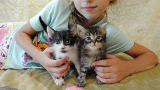 Котята Люк и Лея - от 1 до 37 дней